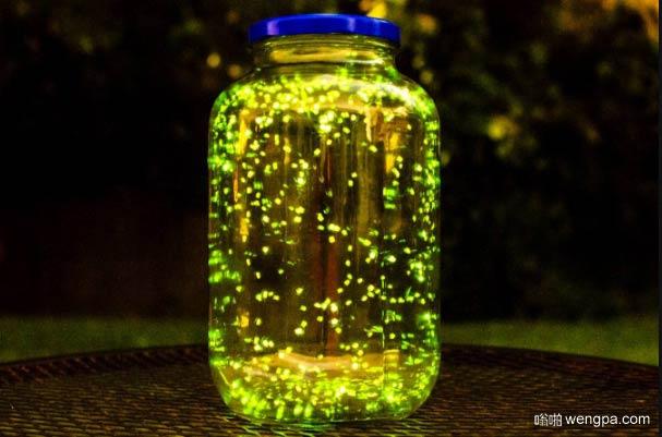 我把一些萤火虫放在一个罐子 做了3分钟的自然灯光(不要担心,我最后都让它们走了)