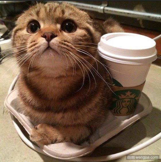 谁要小猫卡布奇诺
