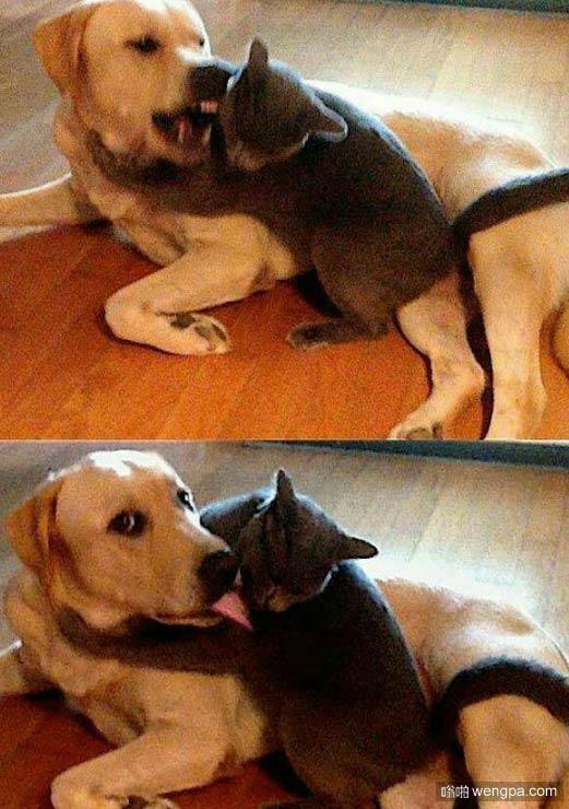 【狗狗和猫搞笑图片】情侣之间的上一秒和下一秒-嗡啪搞笑狗狗