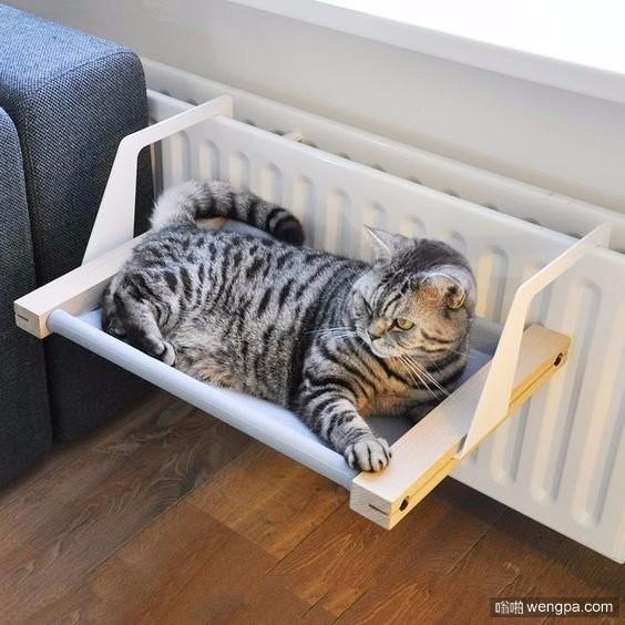 猫的吊床靠近暖气片 冬天的时候这地方应该很暖和