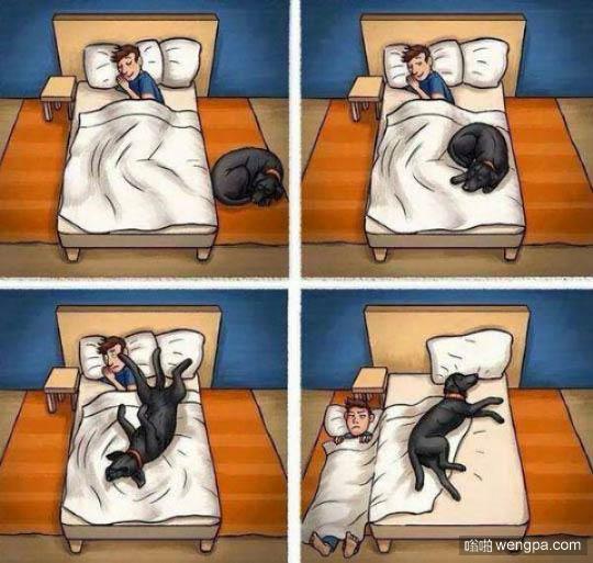 家里有狗狗的前半夜和后半夜