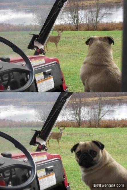 我*(ca)! 看见没!鹿子