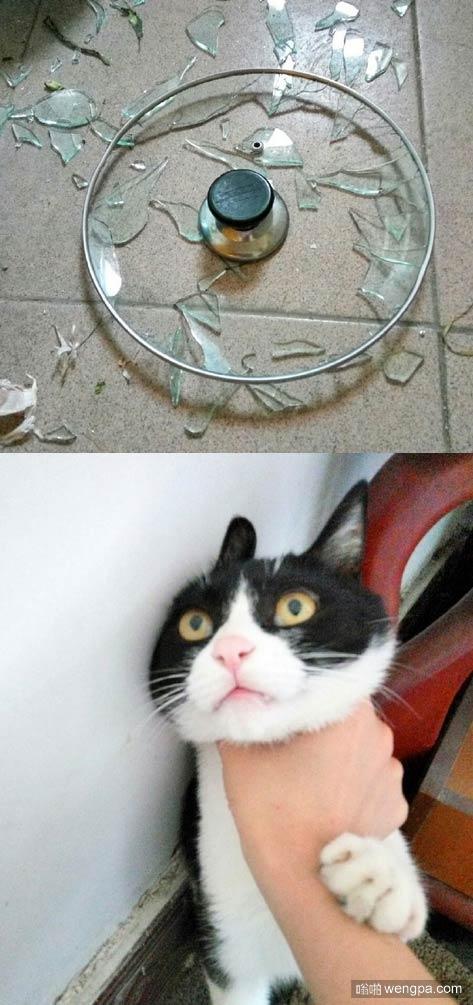 【猫猫搞笑表情图片】是锅盖先动手的-嗡啪萌宠图片