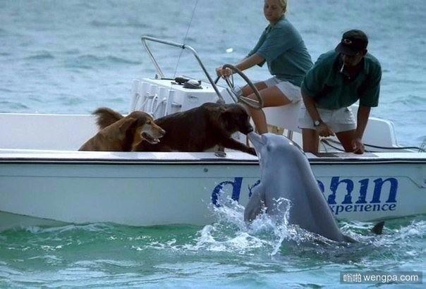 狗狗在大海里找到了它的真爱