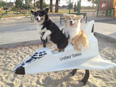 一听说坐飞机 狗狗高兴坏了