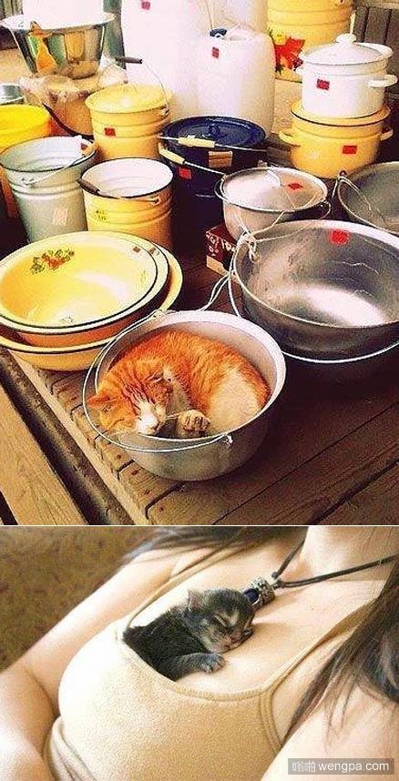 小猫午睡需要一个舒适的地方