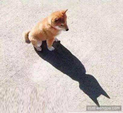 狗的倒影是蝙蝠侠 相信自己