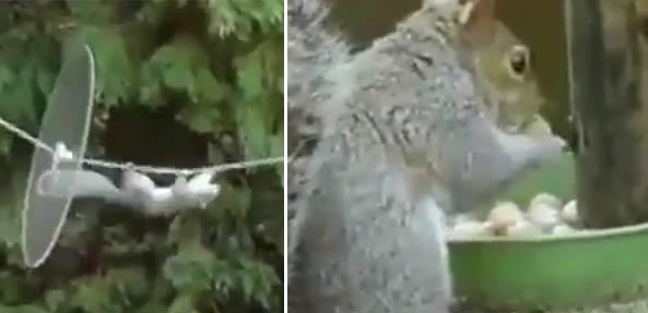 【视频】真是坑啊 松鼠吃个坚果历尽千辛万苦-嗡啪视频