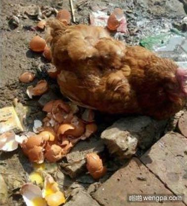 做鸡的坚决不能要孩子,通通打掉