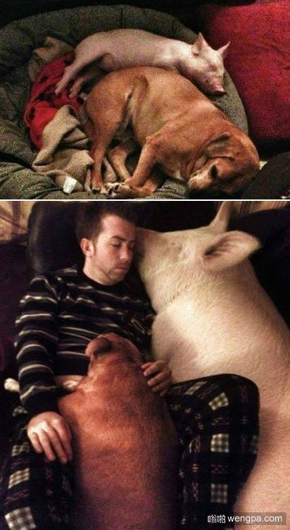 一位facebook网友的哭述:当初买的时候,老板说它顶多长得和小狗一样大,结果。。。