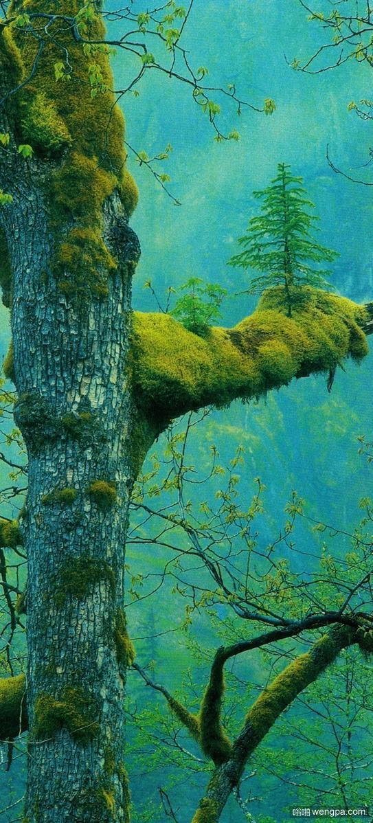 新的树在树干上生长