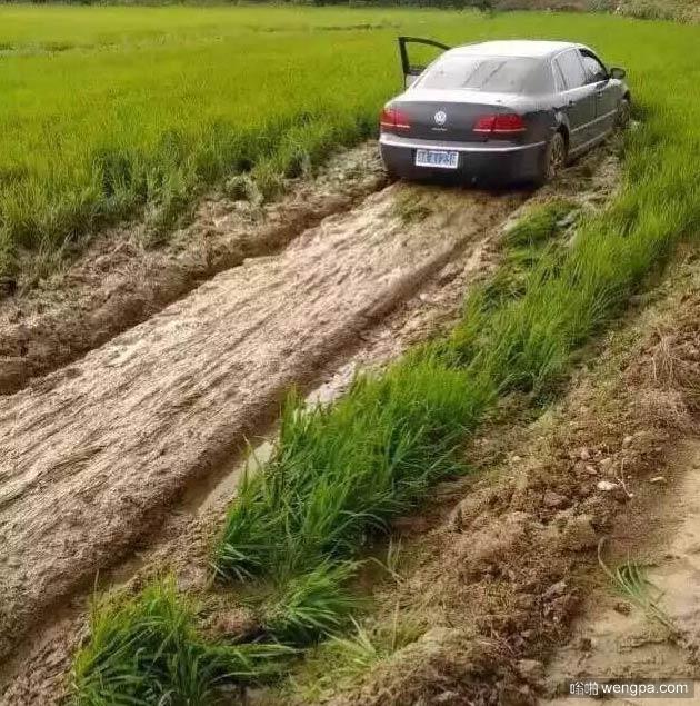 可惜了这些稻子