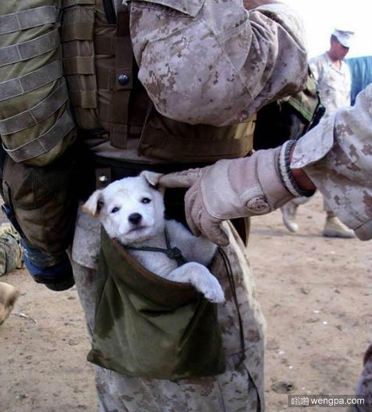 小狗跟随了他们一英里后 一名海军陆战队员把它扶起来 收养了它