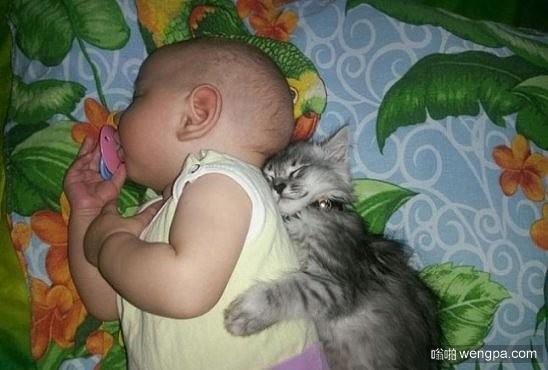 萌宠图片:小猫依偎宝宝睡觉-嗡啪萌宠图片