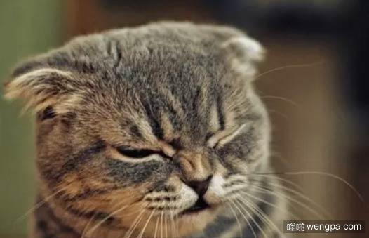 【小猫萌宠图片】当你去医院打针 小猫搞笑表情-嗡啪萌宠图片