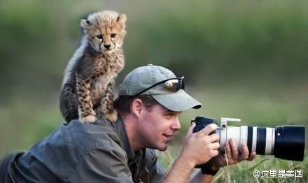 摄影师野外拍摄遭遇野生动物围观