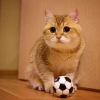 这只叫做Hosico的猫咪,不知为何总有一种谜之委屈感