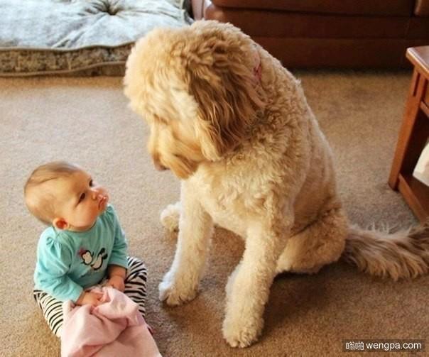 怀孕了不能养狗?你看狗狗和宝宝相处的多好