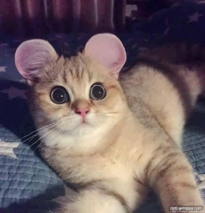 如果猫有一对圆圆的耳朵会怎么样