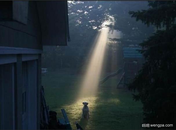 【搞笑狗狗图片】狗狗被圣灵光照 - 嗡啪搞笑狗狗图片