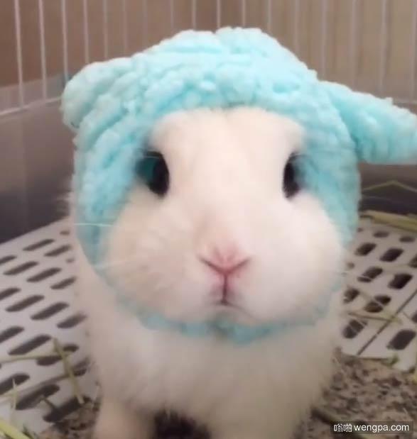 【可爱兔子萌宠图片】兔子还是绵羊-嗡啪萌宠图片
