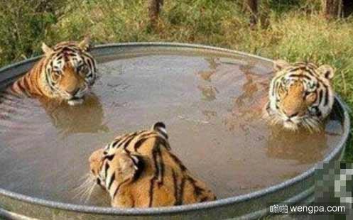炎炎夏日 只有呆在水里睡舒服了。哎那谁,给搓个澡!