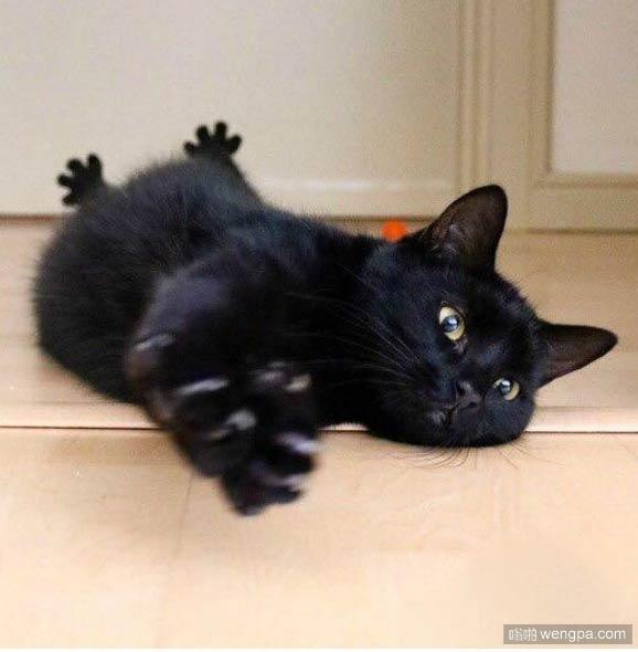 看到黑猫后边的爪子 我笑了