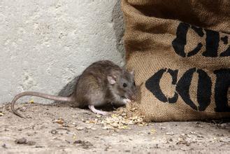 记得以前上班的时候,库房里不知道怎么跑来了好多老鼠