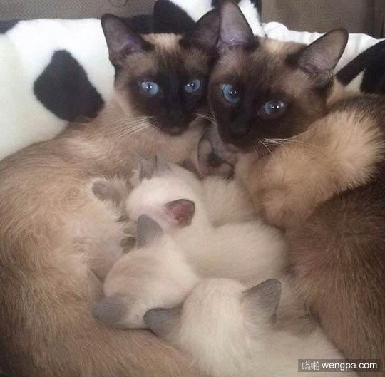 小猫幸福的一家