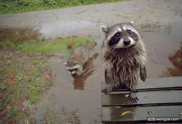 我可以在你的水池里边玩一会儿吗