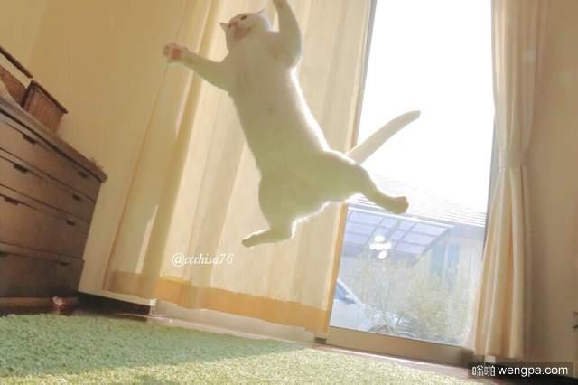 无视重力的大白猫 漂浮喵星人旋转跳跃 一看就不是什么正经猫
