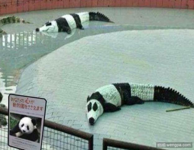 听说这家动物园新引进了很生猛的熊猫