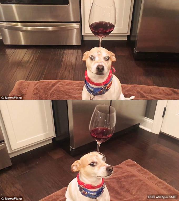 论狗狗出色的平衡感