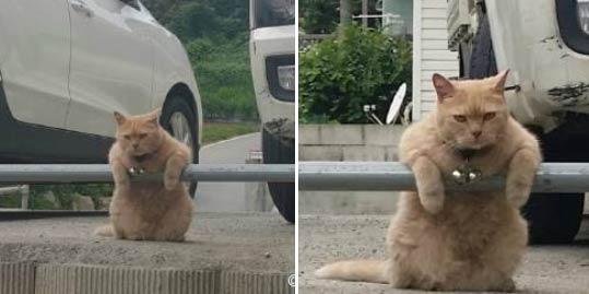"""出门偶遇猫老大……""""过来,给我敲个背~"""""""