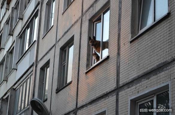 猫和狗狗这对最佳拍档在放哨 监视附近的一举一动