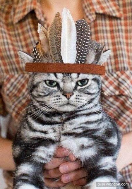 印第安酋长猫