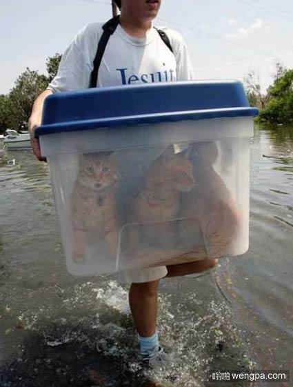 洪水泛滥 转移财产 洪水中的猫猫图片-嗡啪萌宠图片