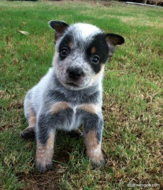 可爱的小狗像只是公仔玩具