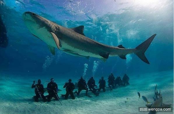 潜水员和虎鲨合影