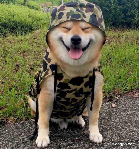 【萌宠图片】doge的军队 迷彩服doge-嗡啪萌宠图片