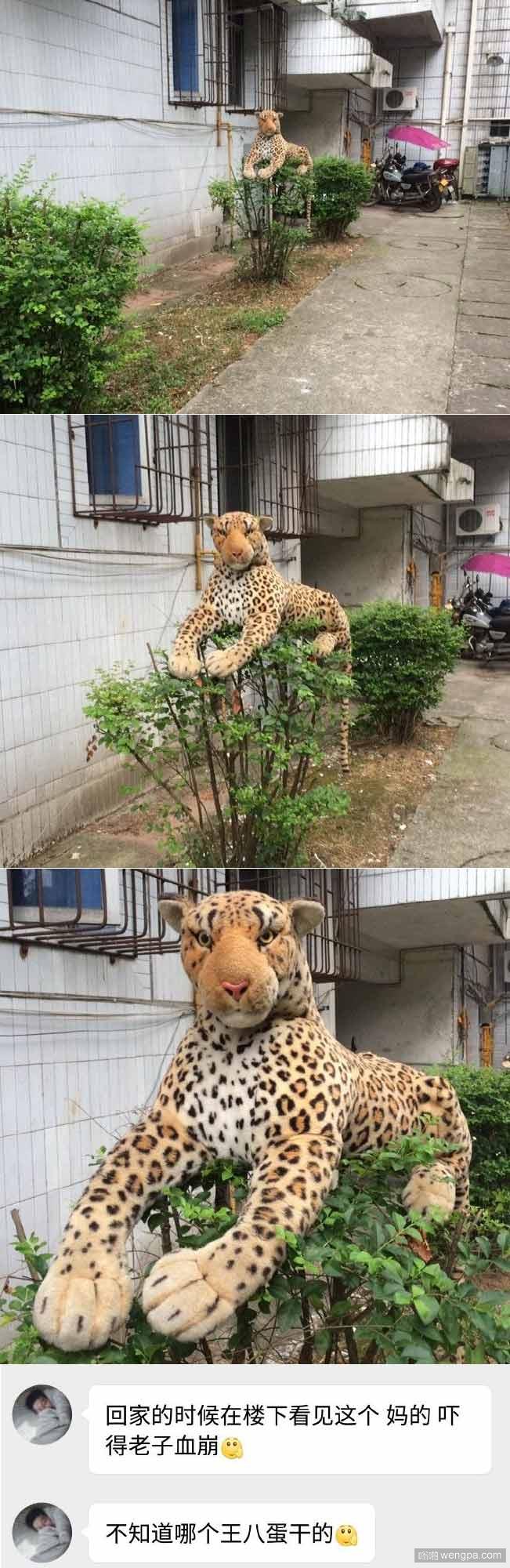 请不要随手丢垃圾 小豹子表示很无辜呢