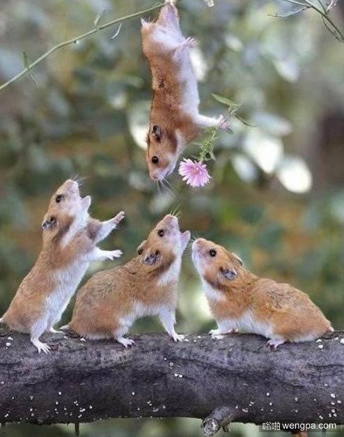负鼠手持花朵浪漫求爱