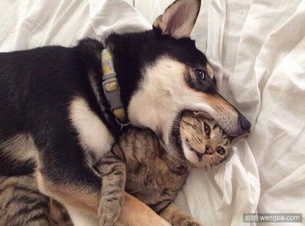 """""""我有两只狗和一只猫,在家里最常重复的命令 – 把猫吐出来!"""""""