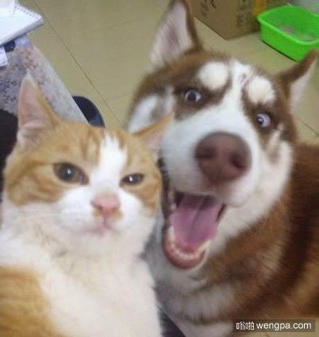 【猫和狗狗自拍搞笑图片】谁的身边没有一个二货朋友 - 嗡啪搞笑动物