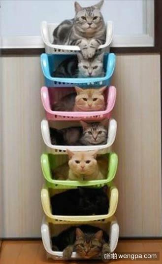【可爱猫猫萌宠图片】七层猫塔 - 嗡啪萌宠图片