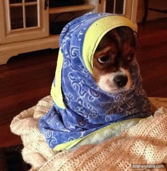 狗狗慈祥的外婆扮相