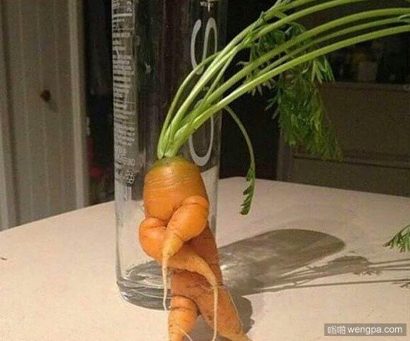 胡萝卜hip-hop - 嗡啪搞笑图片