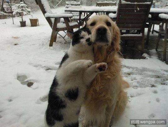 【猫和狗合影搞笑图片】你总是很体贴 我永远爱你-嗡啪搞笑动物