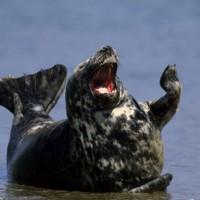 当这些海豹看了嗡啪网的内容后