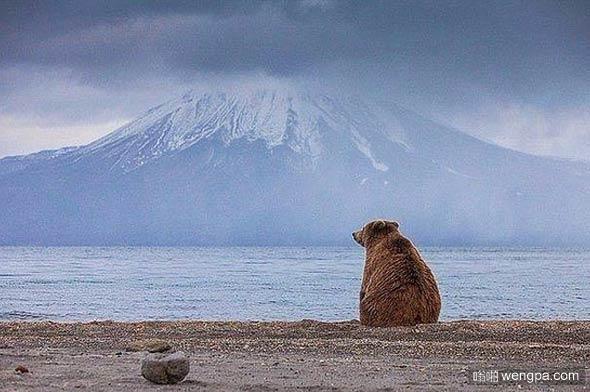 堪察加半岛 孤独忧郁的熊